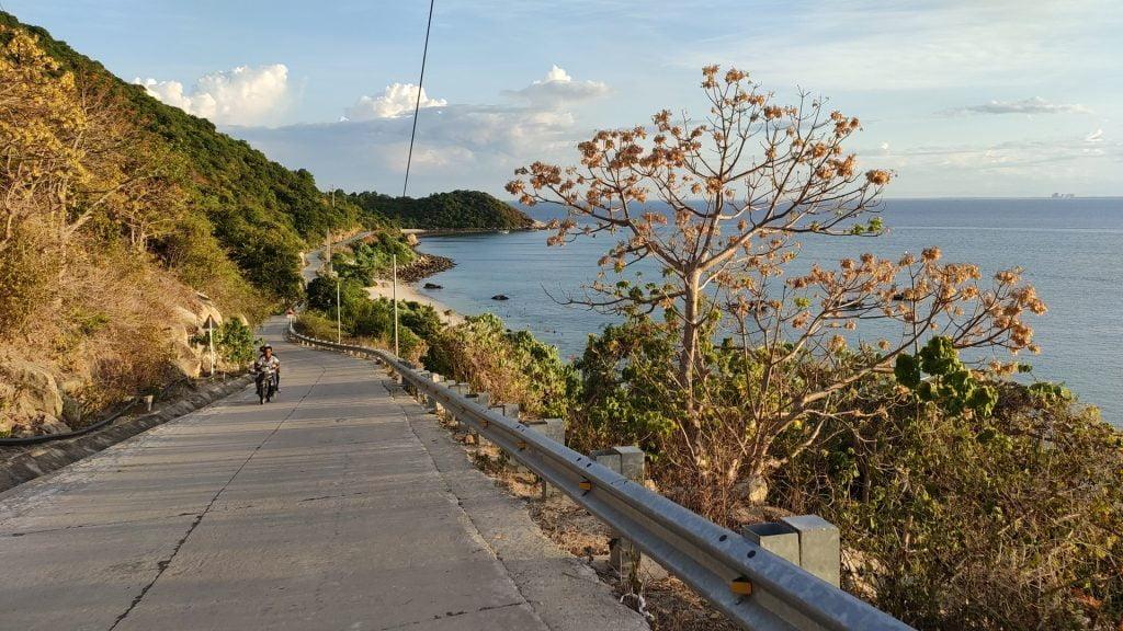 Con đường hoa Ngô Đồng Cù Lao Chàm