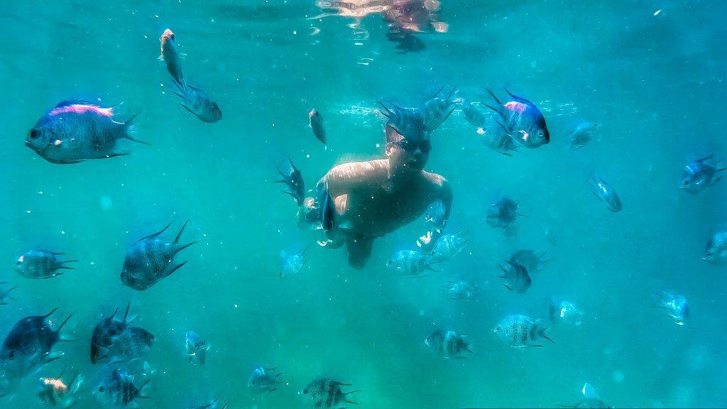 lặn ngắm san hô 1