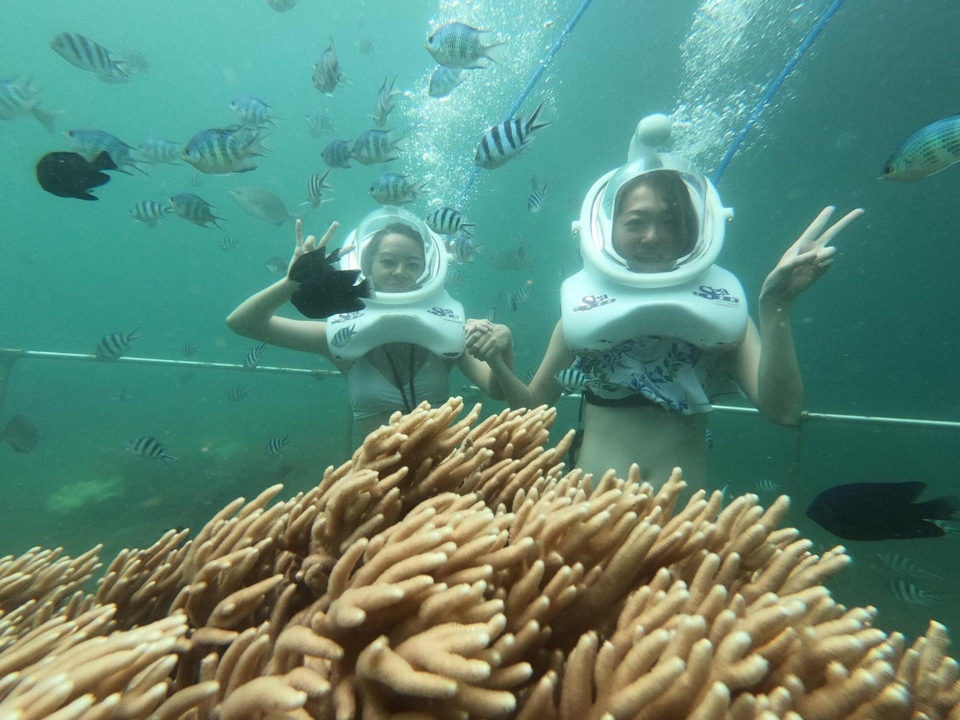 Đến Cù Lao Chàm đừng quên mua vé lặn ngắm san hô nhé